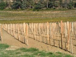piquets pour la viticulture naturwood limousin. Black Bedroom Furniture Sets. Home Design Ideas
